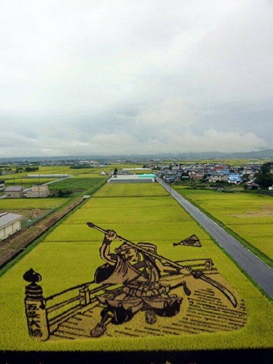Japonya'da bir resim sanatı: Tanbo, tarlalara ekilen farklı renklerdeki pirinçler olgunlaştıklarında devasa resimlere dönüşüyor