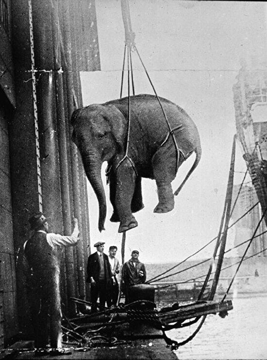 Bir sirk filinin taşınması, 1930 yılı