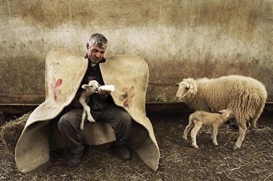 Konya, Beyşehir'de yeni doğmuş kuzuyu elleriyle besleyen bir çoban