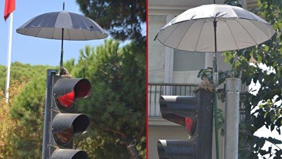 Trafik lambasının tepesine kuşlar için şemsiye takan kişi, her kimsen seni seviyoruz