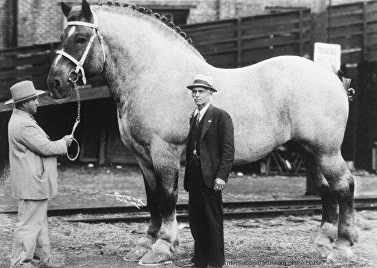 Dünyanın en büyük atı, 1928