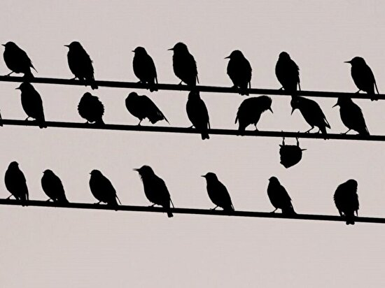 Herkesin tanıdığı ters kuş gibi olan birisi vardır