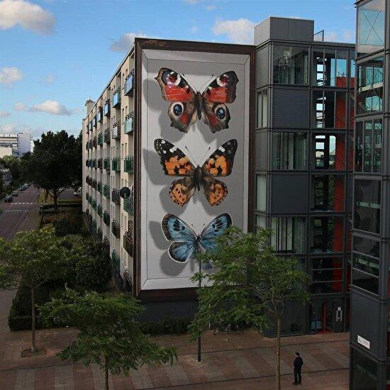 Breda'dan kelebekler, Hollanda