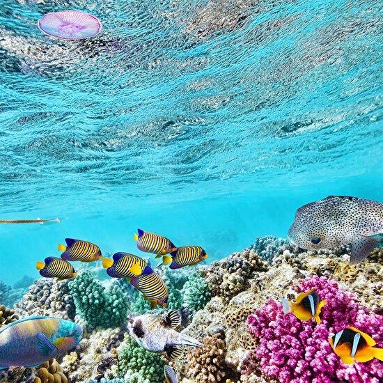Avustralya'daki Büyük Set Resifi