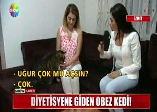 Kediyle röportaj yapmak mı daha iyi fikir görmedim