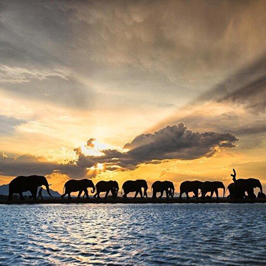 Afrika'da muhteşem gökyüzü manzarası altında yürüyüş yapan filler