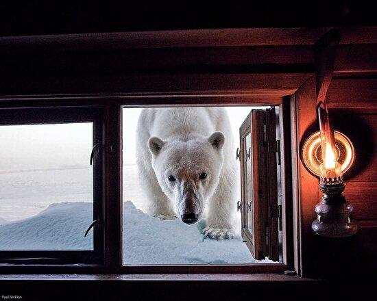 Norveç'teki bir eve küçük bir misafir gelmek istiyor