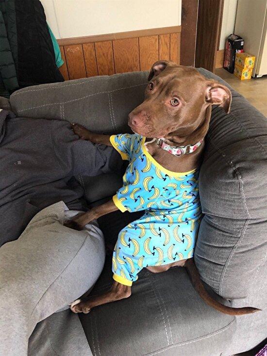 Köpekler de böyle giyinsin