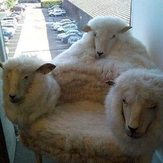 Koyun koyuna oturmak isteyenlere