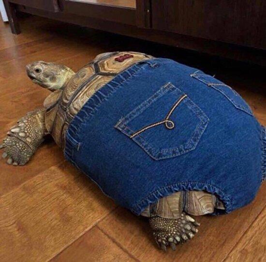 Zayıfken aldığım pantolona zorla sığdım
