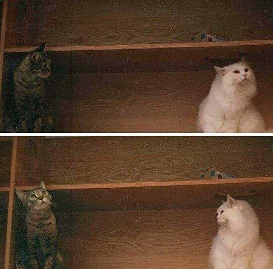 Kediler de bakışlarını kaçırır