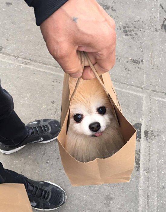 Gelirken yarım kilo köpek al