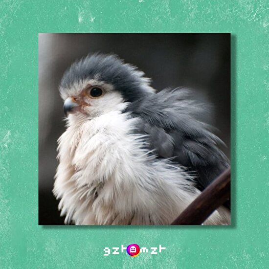 Büyüyünce yıytıcı kuş mu oyucan çen?