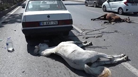 Otomobilin çarptığı atlar telef oldu