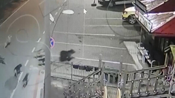 Rize'de 7 köpek merkeze inen ayıyı kovaladı