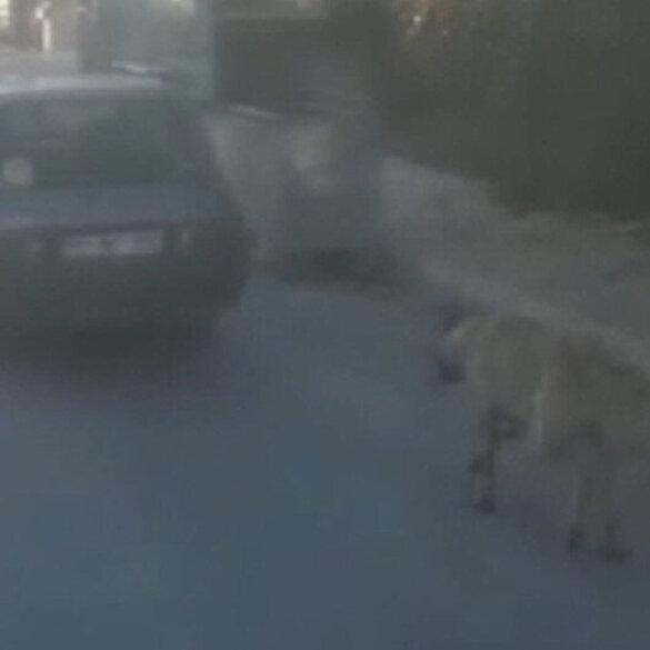Köpeği aracının arkasına bağlayıp koşturdu