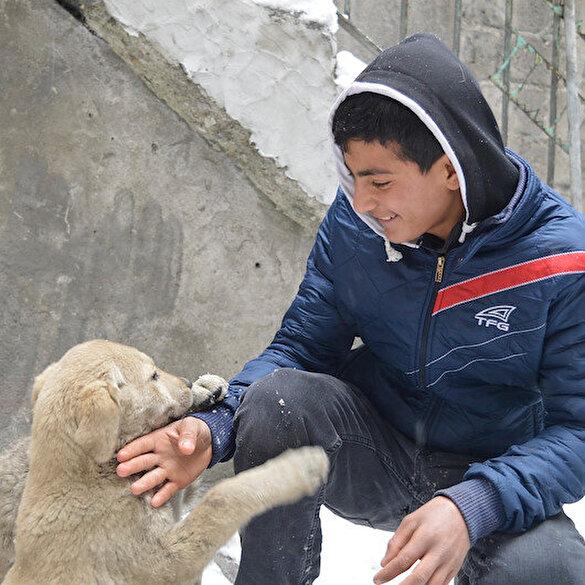 Okuldan kalan vakitte restoranda çalışıyor: Kazancıyla sokak köpeklerini besliyor