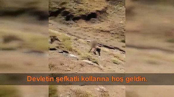 PKK'da çözülme son hız devam ediyor: Hakkari'de bir terörist kahraman Mehmetçiklere böyle teslim oldu