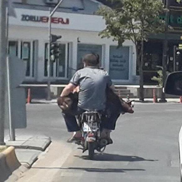 Kurbanlık koyunu motosiklette aralarına alarak taşıyan iki arkadaş oluşturdukları ilginç görüntü ile gündem oldu