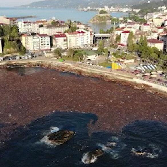 Giresun'da selin sürüklediği ağaçlar deniz yüzeyini kapladı