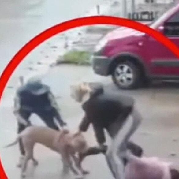 Pitbull dehşeti kamerada: Küçük kızın bacağını kırdı