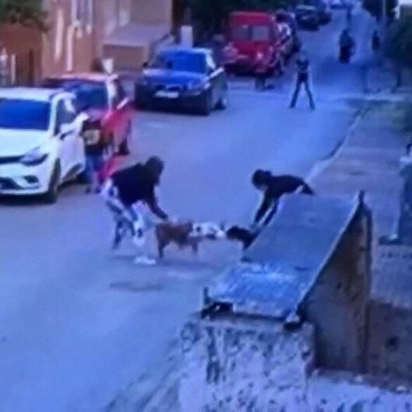 Ataşehir'de pitbull dehşeti: İki köpek yavrularını korumaya çalışan kediye saldırdı