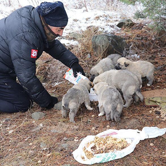 Tesadüfen karşılaştığı 14 köpek yavrusunu beslemek için her gün 5 kilometre yürüyor