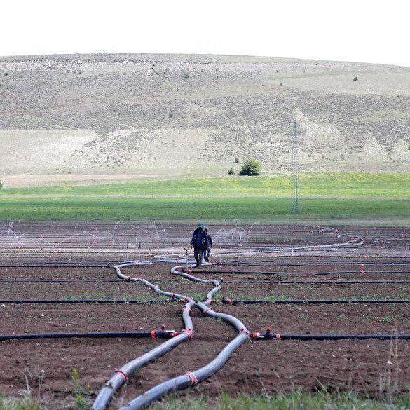 Albayrak Grubu'ndan kuraklığa karşı pancar üreticilerine yağmurlama sistemi desteği
