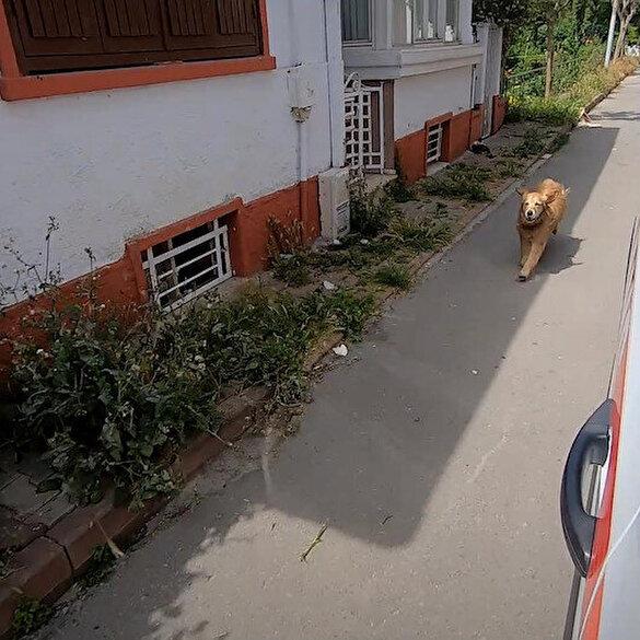Vefalı köpek ambulanstaki sahibini hastaneye kadar koşarak takip etti