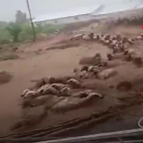 Van'da sel: Birçok yapı yıkıldı hayvanlar sele kapıldı