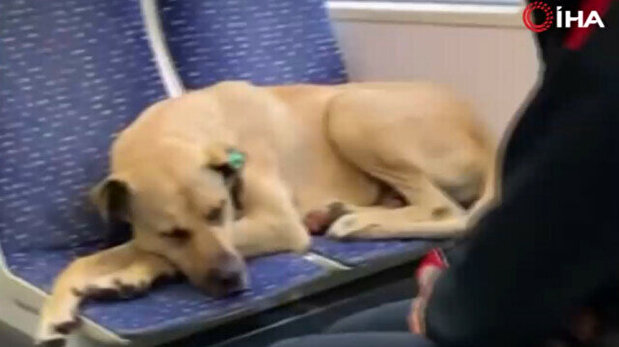 Adorable dog takes refuge from pouring rain o...