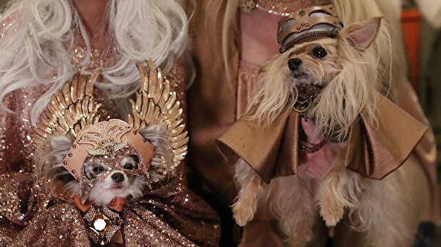 Backstage at the 16th annual New York Pet fashion show in New York