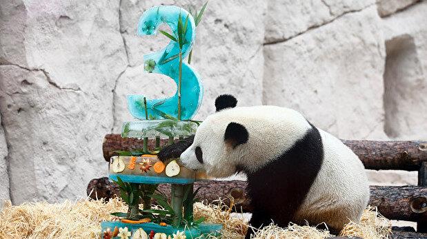 Moscow Zoo celebrates birthday of 2 adorable pandas