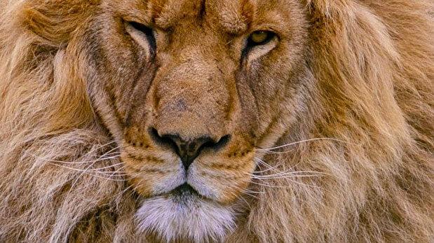 حديقة حيوانات أنطاليا تستأنف استقبال زوارها وفق تدابير كورونا