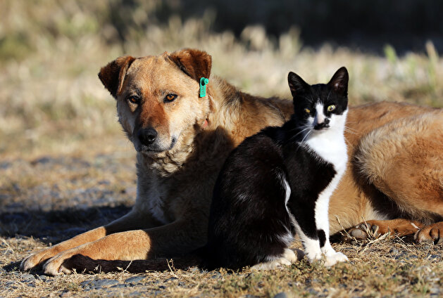 Adorable kitten strikes up funny friendship with dog in Turkey