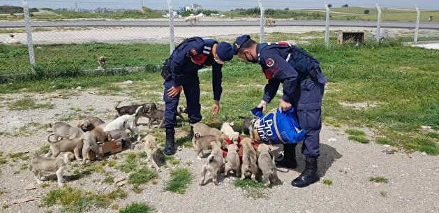 Turks take to streets to feed stray animals during nationwide lockdown