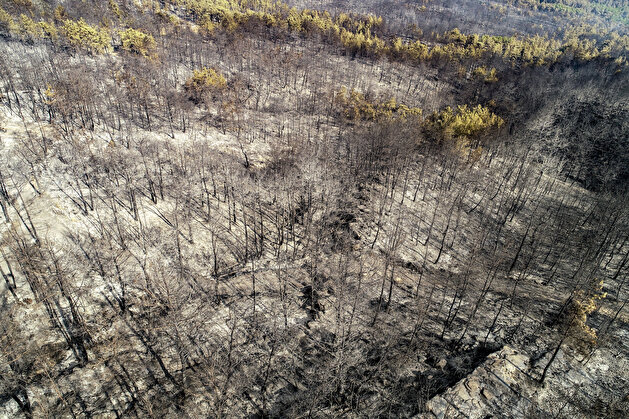 Aftermath of forest fire in Turkey's Antalya