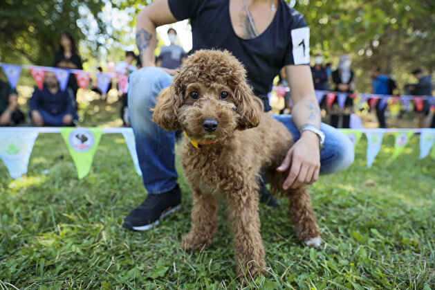 Furry friends go for the gold in Turkey dog competition