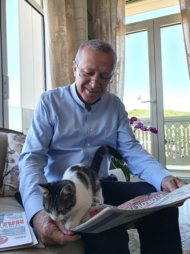 President Erdogan reads Sunday papers with adorable cat on his lap