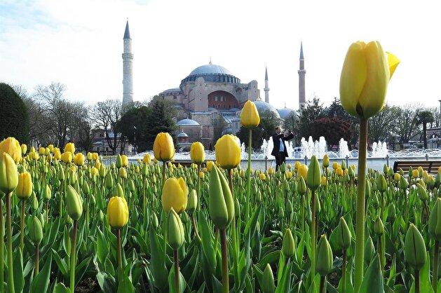 Istanbul's tulip season is in full bloom