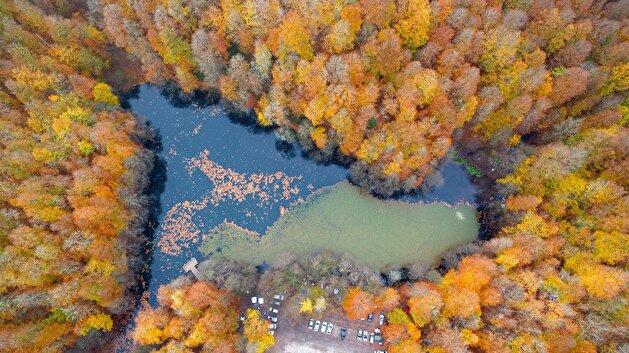 Autumn transforms national park in Turkey's Bolu