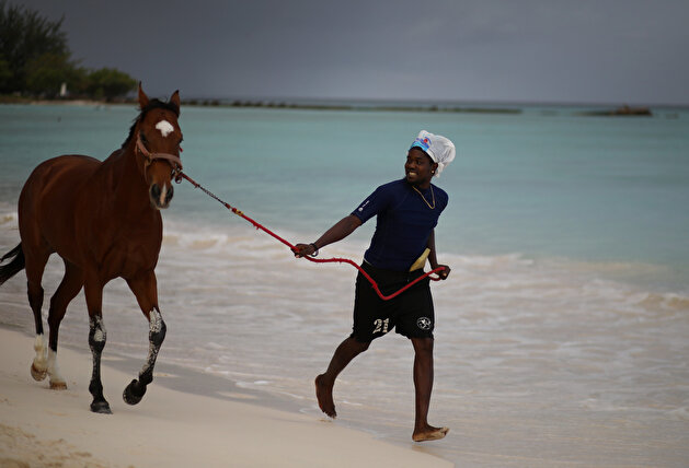 Horses enjoy being washed in famous Barbados beach