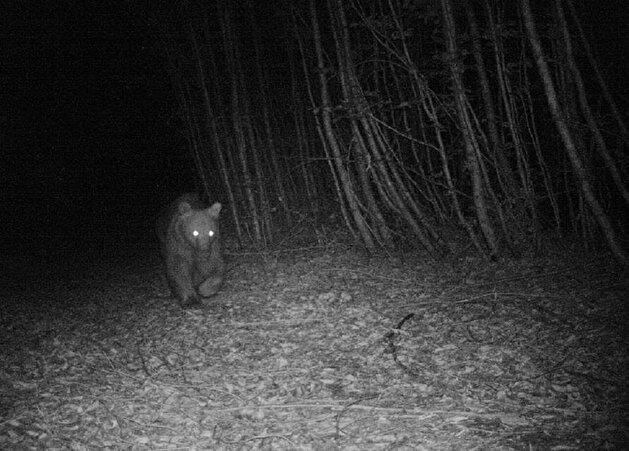 الكاميرا الخفية تحمي الحيوانات في يالوفا التركية! (صور)