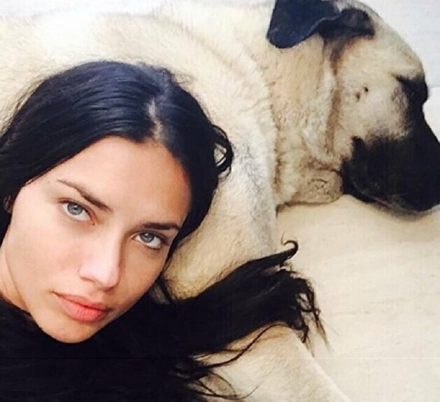 Top dog: Turkish breeders eager to gift supermodel Adriana Lima furry friend
