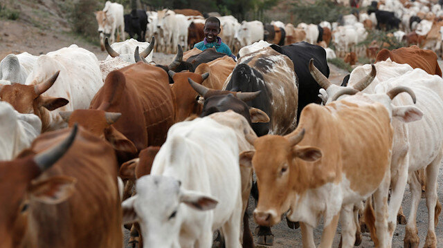 Deadly ranch invasion shows land-use conflicts in Kenya: experts