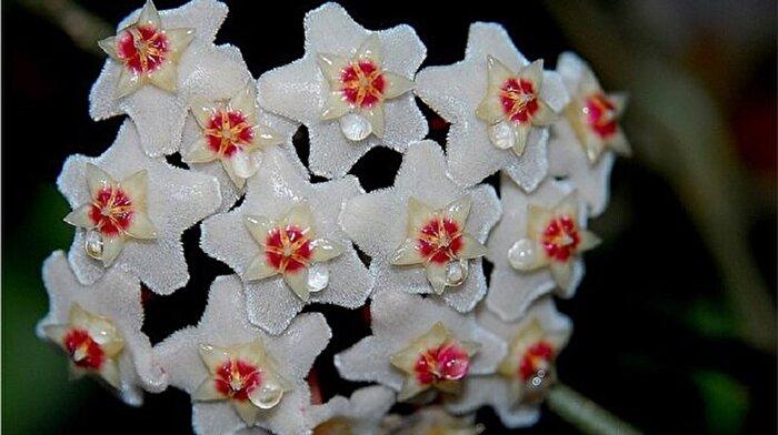 Kışın yetiştirebileceğiniz 12 farklı kış çiçeği