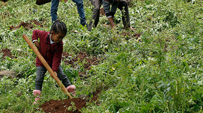 Etiyopya'da yeşil seferberlik: 200 milyon fidan dikilecek