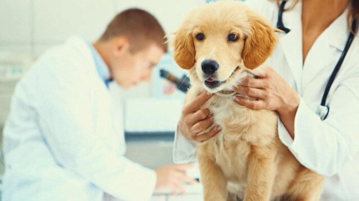 DGS sonuçlarına göre tercih yapacak adaylar heyecanlı: 'Veteriner Hekim olmak mümkün mü?'