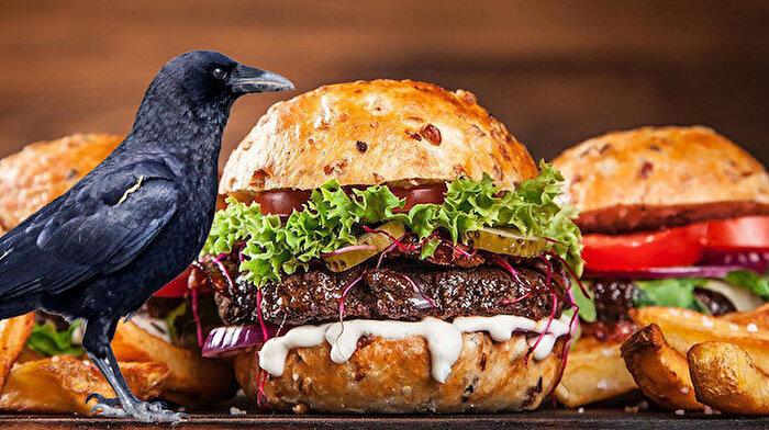 Fast food pişmanlıktır: 'Kargaların bile kolesterolü arttı!'