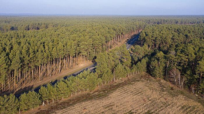 Tesla fabrika için 92 hektarlık ormanı yok edecek